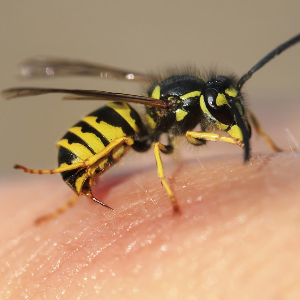 Wasp nest removal enfield